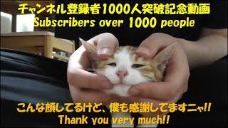 登録者1000人突破記念動画/Memorial video】 保護子猫ラテのフェイスマ...