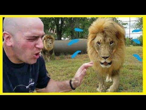 I got peed on by a lion! | EPIC PEETRAYAL