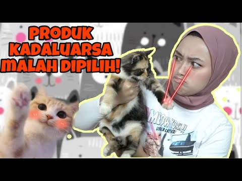 Unduh 101+  Gambar Kucing Di Make Up Paling Baru HD