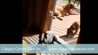 Calgary Canine Care Inc. - Dog Sitting Services East Calgary