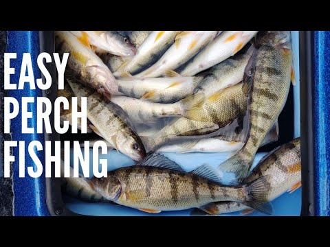 Perch Fishing Lake Michigan
