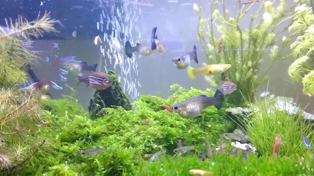 Small Fish Aquarium Youtube