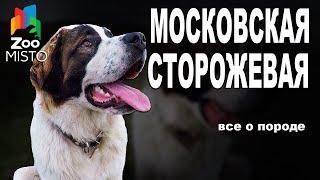 московская Сторожевая - Все о породе собаки  Собака породы - Московская Сторожевая