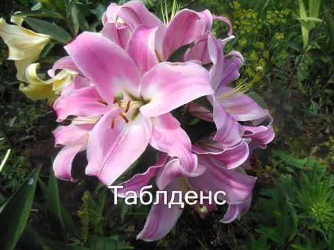Картинки цветы kartinkime