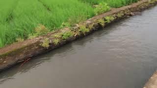 River Nature Scene