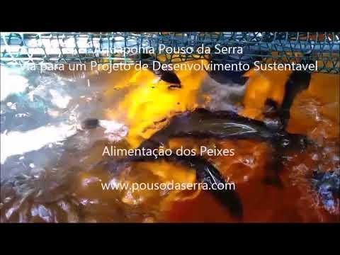 Aquaponia do Pouso da Serra