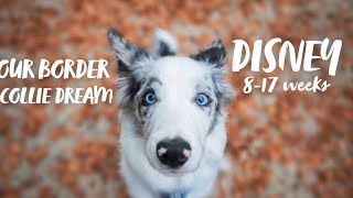 DISNEY♡ | 1 to 17 weeks