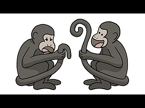 Why Only Some Monkeys Have Awesome Tails