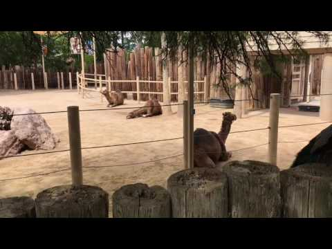 Vlog 3 Reid Park Zoo, Tucson, AZ