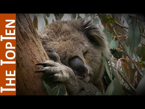 The Top Ten Laziest Animal Species in the World