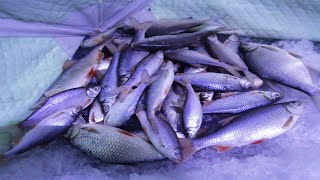 Ловля плотвы на Финском заливе рыбалка мечта