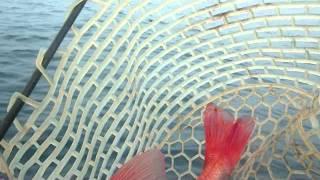 2013年8月 自己記録43cm 1250gが釣れました 駿河湾 清水、三保...