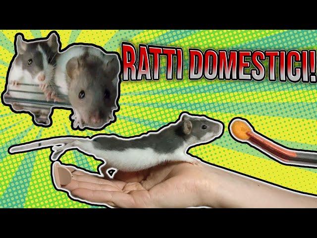 Ho SERPENTI e anche RATTI DOMESTICI... come mai?