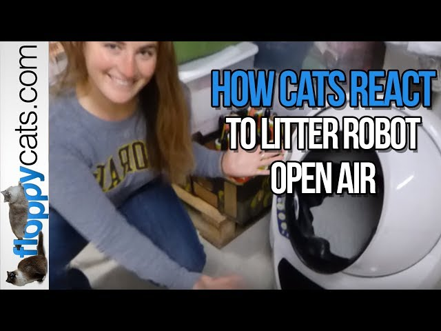 How Cats React to Litter Robot Open Air Litter Robot Arrival Video - Floppycats