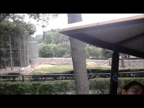 Zoo trip safari, train + zoo