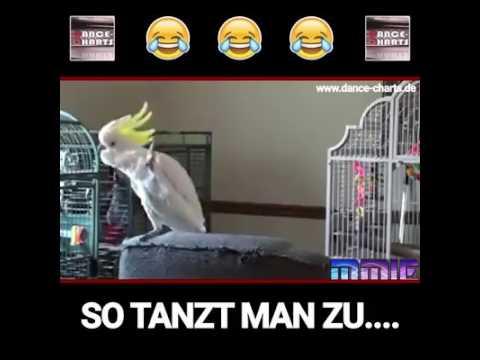 Vogel Musik tanz 🤣🤣🤣