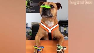 Funny Animals   Funny Animals Compilation July 2017