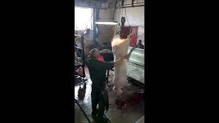 убойный цех свиней