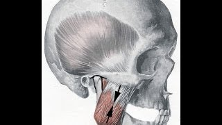 Was bedeutet Cranio Mandibuläre Dysfunktion - CMD