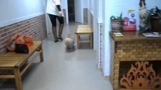 Боня через месяц после операции - Ветеринарная клиника