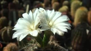 Kaktusz gyűjtemény