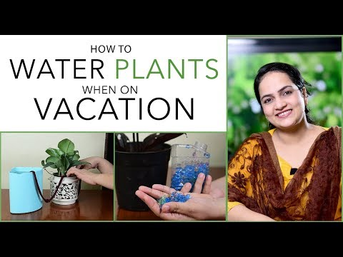 How To Water Plants When On Vacation   Gardening Tips