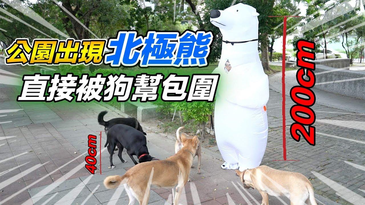 公園出現北極熊,直接被狗幫包圍『超巨大北極熊』Polar bear outfit pet channel
