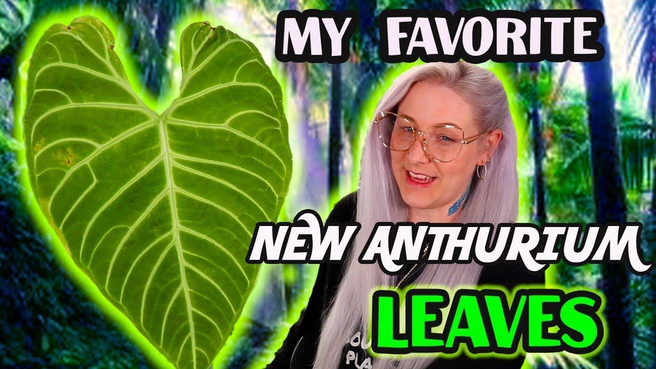 My Favorite Anthurium Leaves & Harli G Plant Swap Update