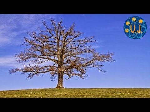 por qu caen las hojas de los rboles en oto o doovi