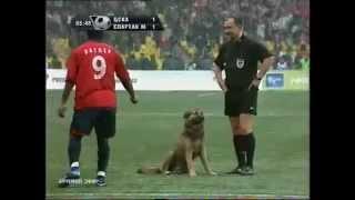 Собака на матче спартак-цска
