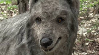 Trzcianka: dzikie zwierzęta nad jeziorem Sarcz