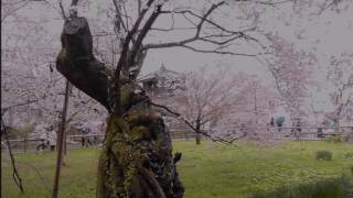 '14年11月5日発売 作詞:高畠じゅん子 作曲:中川博之 編曲:前田...