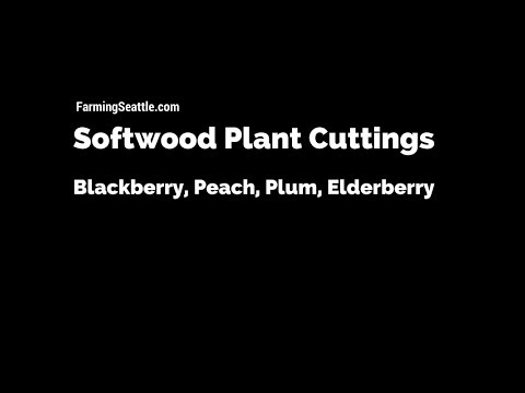 How To Create New Plants With Softwood Cuttings | Farming Seattle