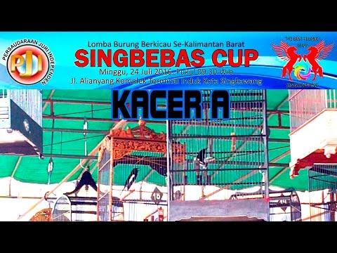 Lomba Burung Kacer A SINGBEBAS CUP Singkawang