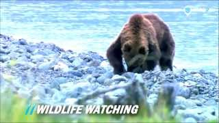 Siberia Wildlife watching | 56th Parallel