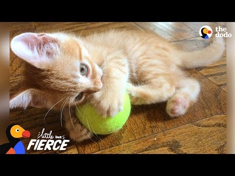 One-Pound Kitten Is SUCH A Survivor | The Dodo Little But Fierce