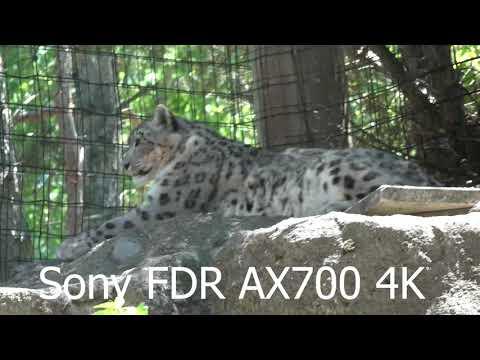 Sony FDR AX700 4K VS Panasonic Camcorder HC WXF991 4K at Rosamond Gifford ZOO