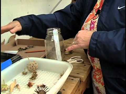 13 окт 2014. Семена герберы, которые предлагает компания «сингента», проходят предварительную очистку и строгий контроль качества. Поверхность семян, как правило, обработана для облегчения посева и покрыта тонкой, часто окрашенной оболочкой (coated). В 1 грамме в среднем содержится.
