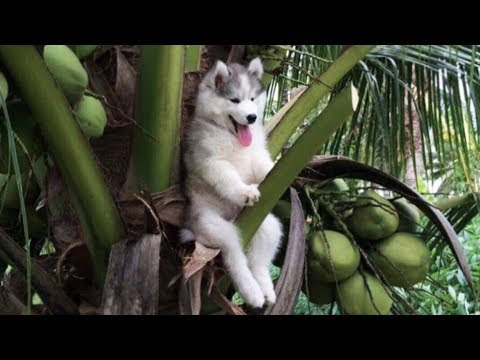 Cute is Not Enough - Funny Cats and Dogs Compilation #205