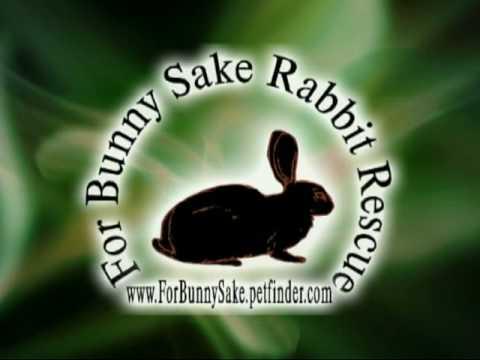 For Bunny Sake's Commercial