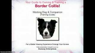 Border Collie: Working Dog & Companion [training Guide]