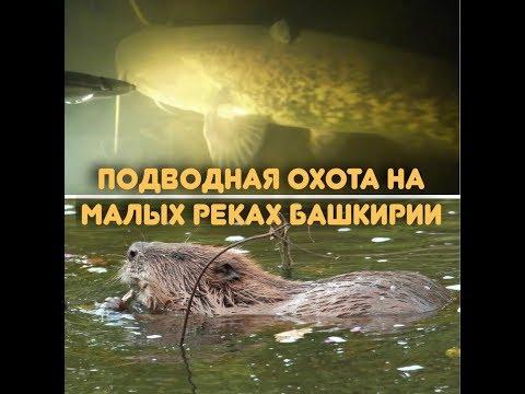 Подводная охота на малых реках Башкирии.Огромные бобры.Нашли сома.Жесть потерялся на подводной охоте