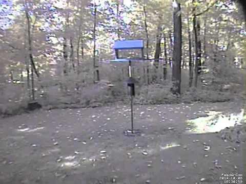 Feedercam Capture (2014-10-08)