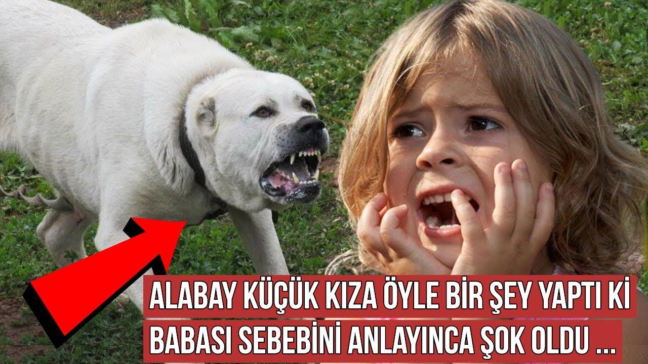 Kurtardığı Alabay Cinsi Köpek Kızına Öyle Bir Şey Yaptı ki Adam Sebebini Anlayınca Şok Oldu