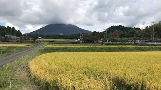 Japan Autumn Rice Terrace View | Tottori