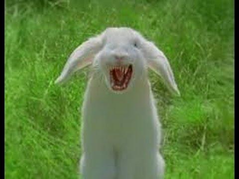 Insane Decay of Mind-Rabbit  
