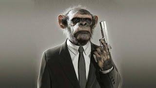Приколы с обезьянами-Fun with monkeys.