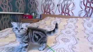 Котята очень милые , смешные смотреть! :З