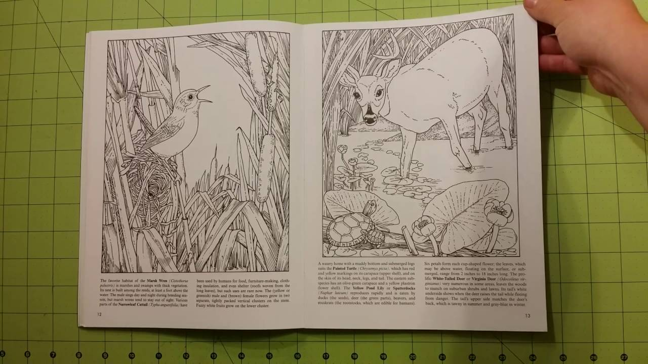 The Freshwater pond dover coloring book review flip through adult ...