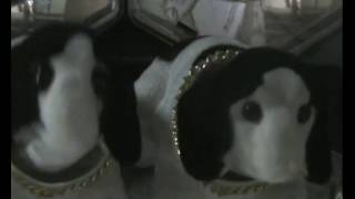 DISCO DOGS - Funny dog video